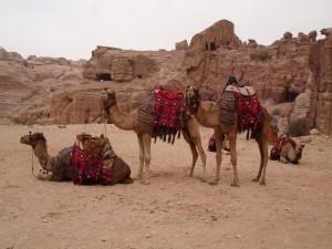 Petra, excursiereis Jordanie